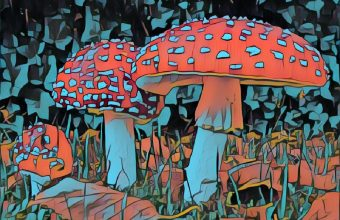 Mushrooms from Wonderland